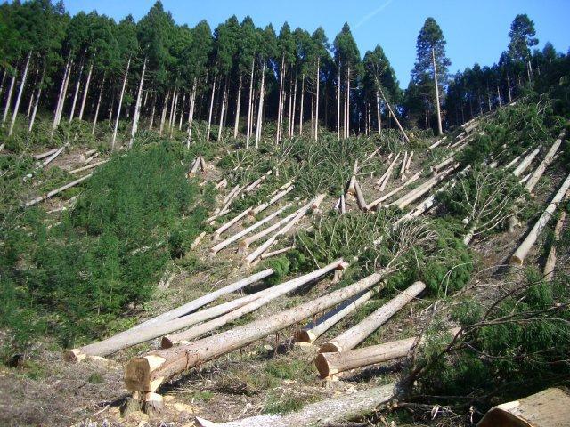 Винищення карпатських лісів припиниться? Держлісагентство забезпечило повний електронний облік усієї заготовленої деревини