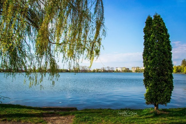 У міському озері Івано-Франківська виявили тіло жінки - Місто
