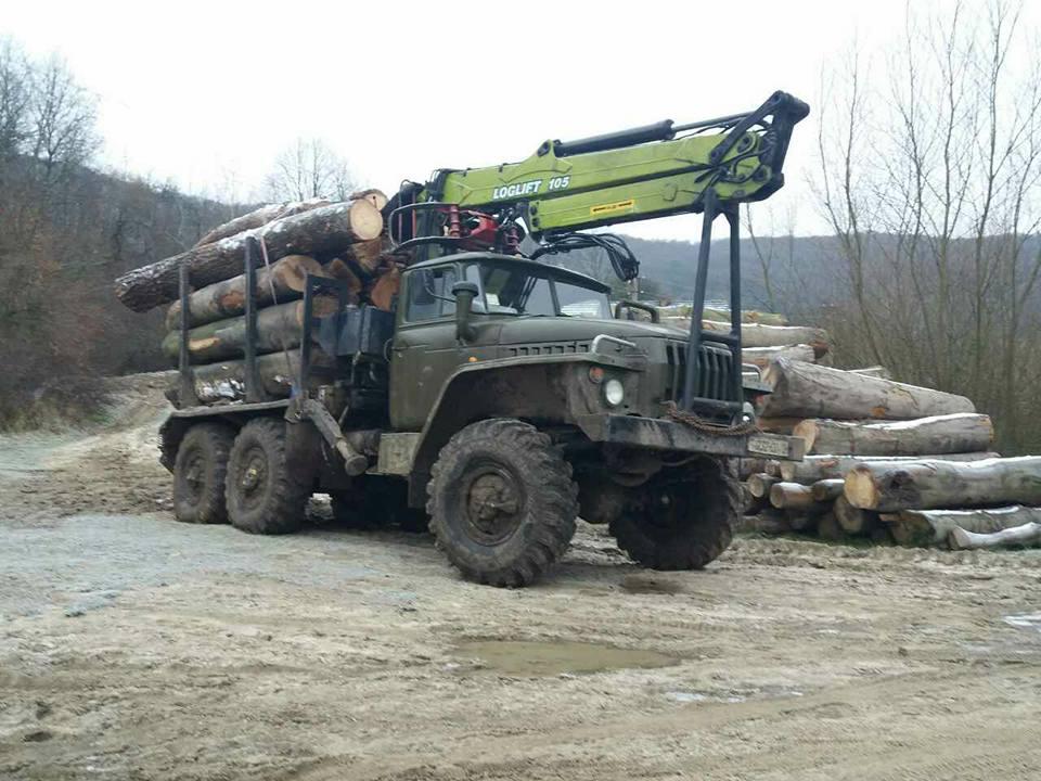 Жителі прикарпатського села просять допомоги у боротьбі з вирубкою лісу (фото)