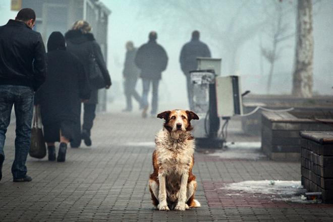 У Франківську налічується близько 1000 безпритульних собак