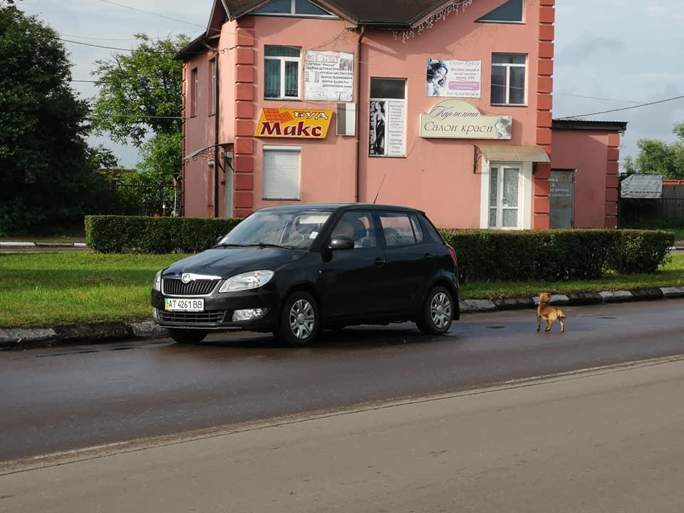 На зупинці в Калуші з машини викинули собаку, — очевидець (фотофакт)
