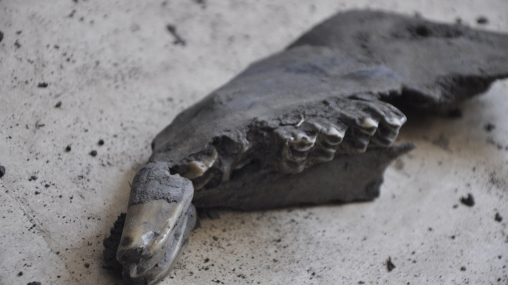 Науковці озвучили вік доісторичної тварини, рештки якої знайшли у Калуші (фоторепортаж)