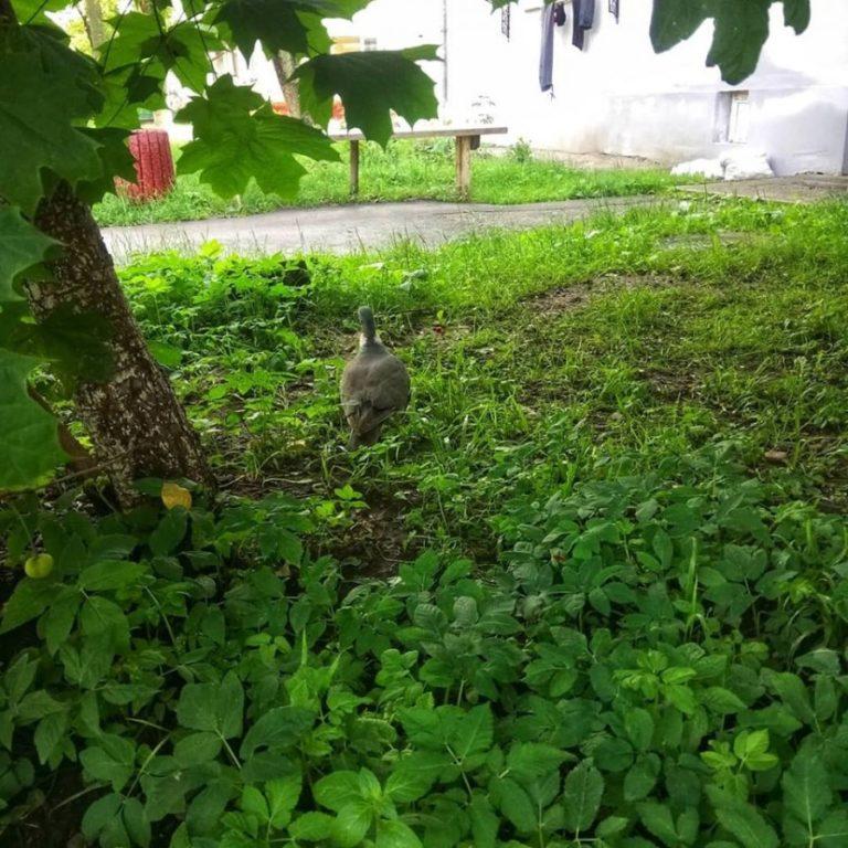 У Калуші помітили рідкісного птаха (фотофакт)