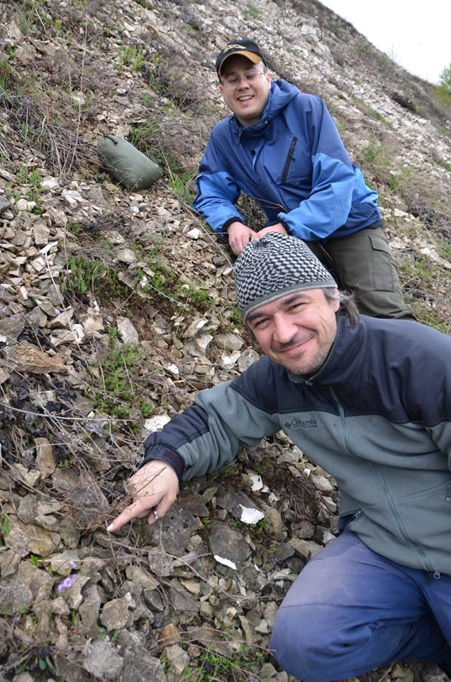 У Тлумацькому районі знайшли одну з найрідкісніших рослин світу (фотофакт)
