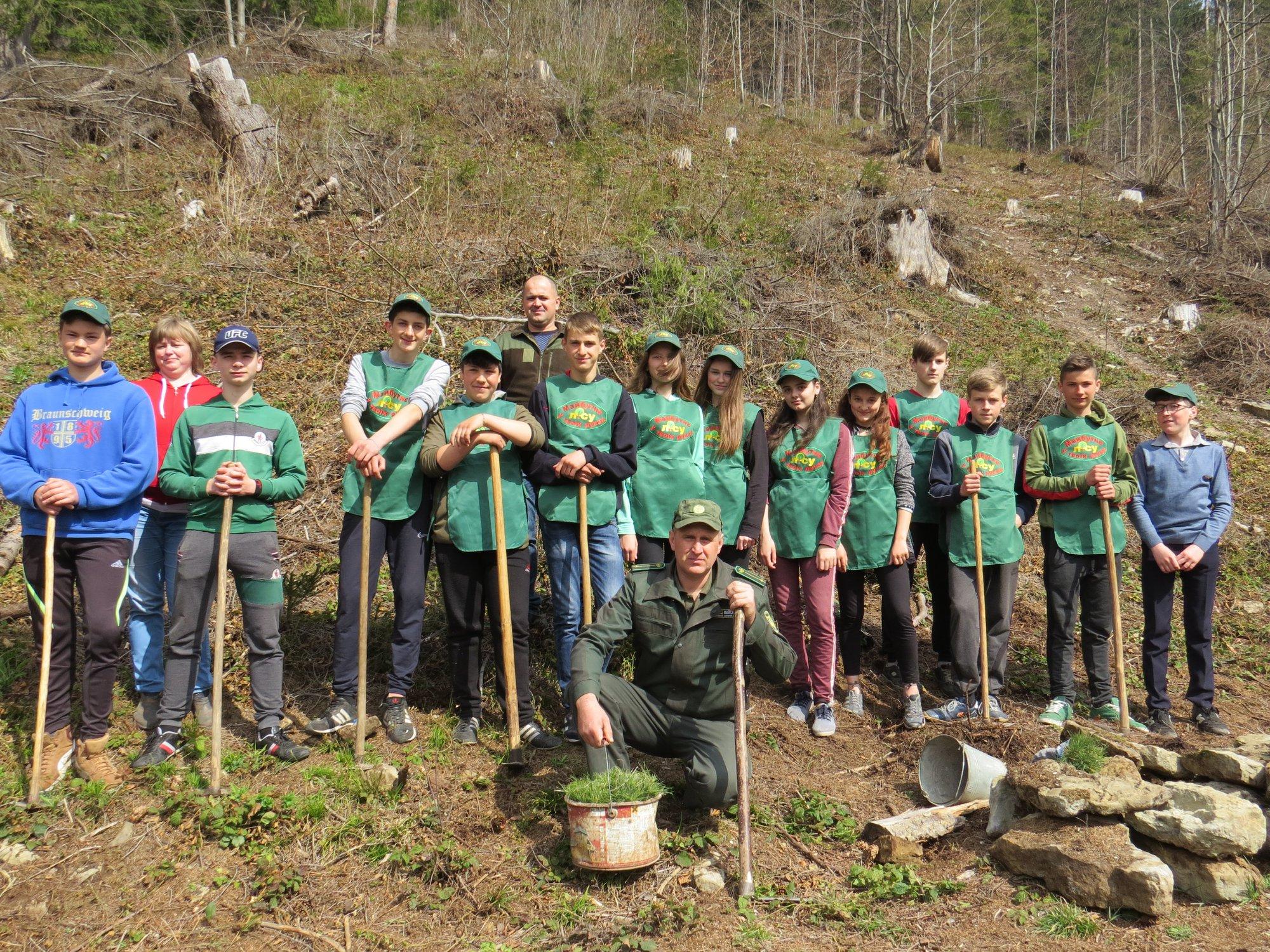 У високогір'ї Карпат активно висаджують молодий ліс
