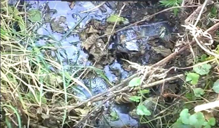 Село на Коломийщині отримало 11 мільйонів гривень на проведення каналізації (відеосюжет)