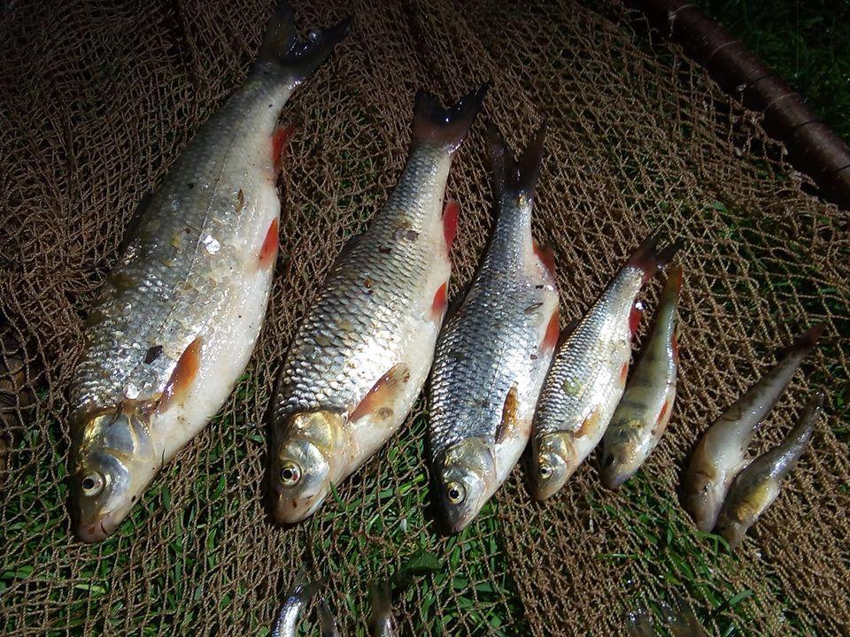 На Дністрі упіймали браконьєра, який ловив червонокнижну рибу: фото