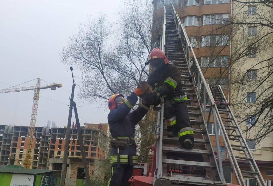 Франківські рятувальники зняли кота з дерева
